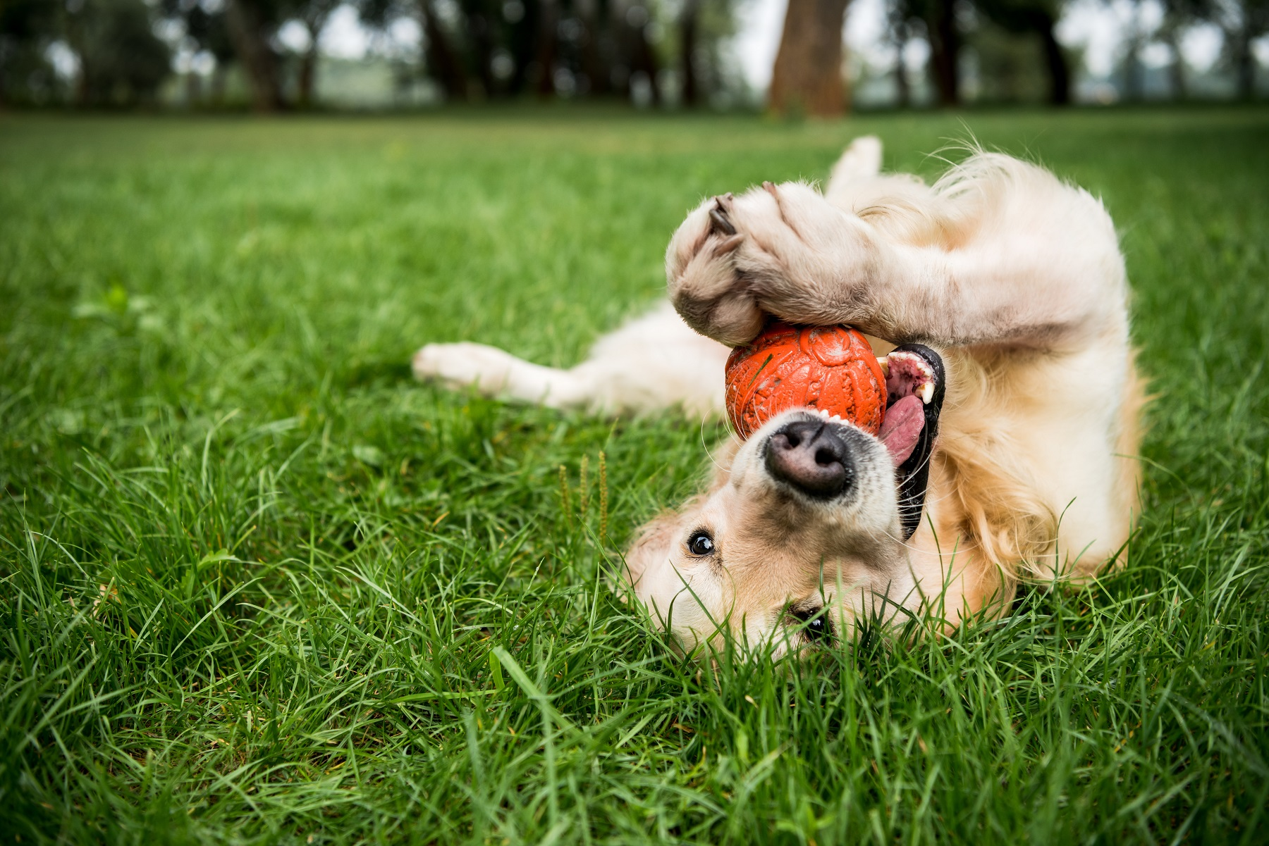 Should You Own a Dog? Here Are 5 Health Benefits Associated With Having a Dog