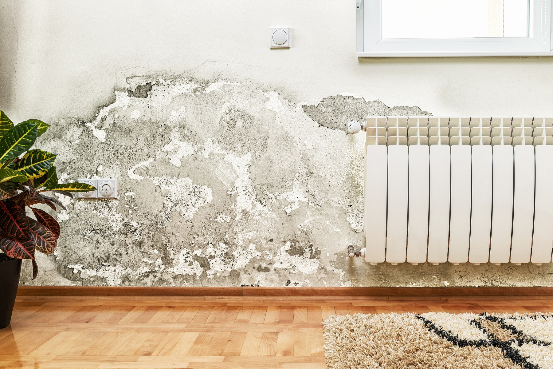 Mold Toxicity: How to Diagnose and Treat Mold Exposure For Good